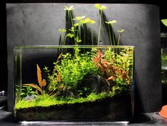Xz's 3ft High tech + low tech nano experiments - The Planted Tank Forum