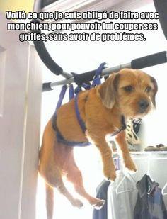 Ahhh les chiens, meilleurs amis de l'homme, toujours prêts à exprimer leur ineffable loyauté et leur amour inconditionnel envers leurs maîtres.Enfin, quand ils ne sont pas occupés manger à-peu-près tout ...