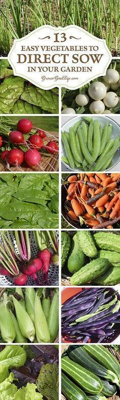 To direct sow your seeds just means to plant your seeds outdoors in the garden instead of starting the seeds indoors under lights. Plants that are either difficult to transplant or don't need extra time to get a jump start can be sowed directly into the ground. Here are 13 easy vegetables to direct sow in your garden. #ingroundvegetablegardeningideas #indoorvegetablegardeninglights