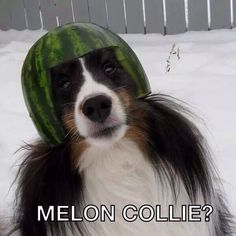 Melon Collie?  - it's a dog with a watermelon on it's head