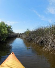 Janes Island State Park in Maryland. The park offers over 30 miles of water trails perfect for canoeing or kayaking.