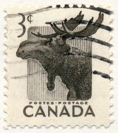 Wildlife Series, Moose (issued 1953)