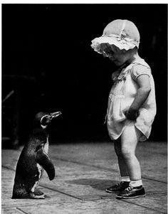 cute penguin.