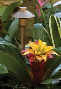 Installed Mini China Hat Area/Path Light by CAST Lighting. This ultra-compact and rugged solid bronze path/area light provides a soft glare free illumination. Especially useful in plant containers such as urns and garden boxes. Fixture can be stake or canopy mounted. Pin this outdoor lighting fixture!
