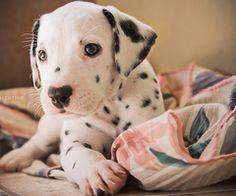 SOOOOO cute. <3