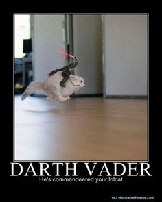 darth vader riding a cat