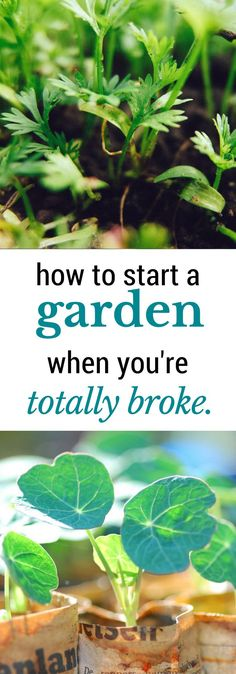 Get a garden's worth of seedlings started without spending money you don't have! Here's how!