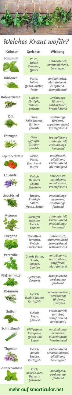 ABC: Which herb for what, what fits for what? -Kitchen herbs ABC: Which herb for what, what fits for what? -herbs ABC: Which herb for what, what fits for what? -Kitchen herbs ABC: Which herb for what, what fits for what? Best Smoothie, Metabolic Workouts, Mozarella, Full Body Hiit Workout, Kitchen Herbs, Kitchen Racks, Fitness Design, Fast Metabolism, Health Facts