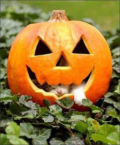 30 Cute Cats on Halloween