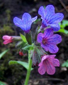 L'image contient peut-être: plante, fleur, nature et plein air