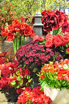 Beautiful flowers. Seeing red in Paris: the range of color palette