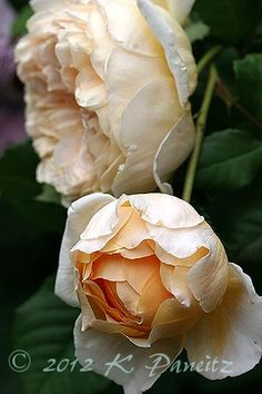 'Crown Princess Margareta