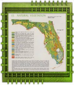 Fort Myers Florida, Nature, Naturaleza, Off Grid, Natural, Mother Nature, Scenery