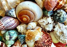 inkspired musings: Comments, Seashells and coloring books