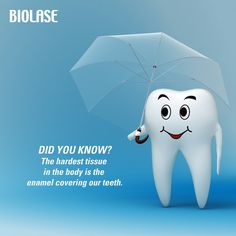 DID YOU KNOW? The hardest tissue in the body is the enamel covering our teeth. #www.siegelanddolt.com