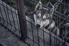 photograph by Irina Maria Ganescu
