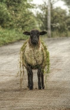 Where have ewe been?