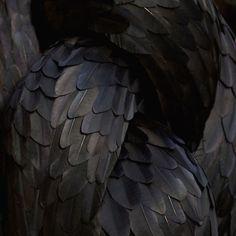 Iridescent Black Feathers - elegant natural textures; organic pattern source…