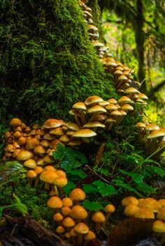 mushrooms near middle falls by Aryk Tomlinson - Wald Mushroom Art, Mushroom Fungi, Orange Mushroom, Mother Earth, Mother Nature, Mushroom Pictures, Theme Nature, Nature Aesthetic, Belle Photo