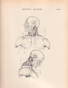 Vintage Print Human Anatomy Illustration 1941 Wall Art by AgedPage, $11.00