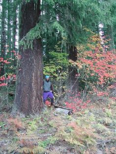 The Fate of Western Oregon's O Forest Lands–Please Join Us