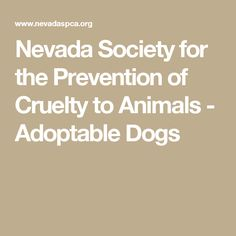 Nevada Society for the Prevention of Cruelty to Animals - Adoptable Dogs