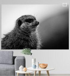 Nieuw in mijn Werk aan de Muur shop: meerkat manor