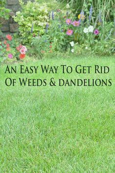 An easy way to get rid of weeds & dandelions. is a product that works awesome! It's called Bayer Advanced, it kills hundreds of types of weeds without hurting your grass. It's in a blue bottle, and we just grab it whenever we go to Home Depot. Garden Yard Ideas, Garden Projects, Lawn And Garden, Garden Landscaping, Summer Garden, Garden Water, Garden Weeds, Garden Plants, Vegetables Garden