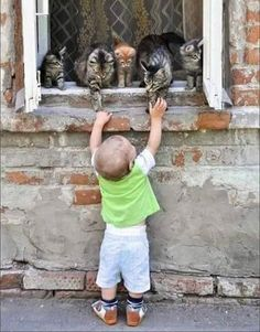 Boy and cats Animals And Pets, Baby Animals, Funny Animals, Cute Animals, Crazy Cat Lady, Crazy Cats, Cute Kids, Cute Babies, Amazing Animals