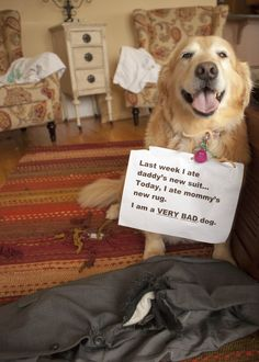 Smiling bad dog 벌서는 중~