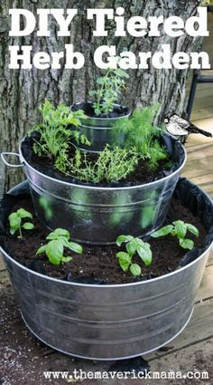 Herbs Gardening Want to start an herb garden? Check out The 11 Best Herb Garden Ideas for lots of inspiring planting ideas. - Want to start an herb garden? Check out The 11 Best Herb Garden Ideas for lots of inspiring planting ideas. Container Herb Garden, Garden Plants, Container Gardening Vegetables, Shade Garden, Backyard Shade, House Plants, Unique Garden, Best Garden, Quick Garden