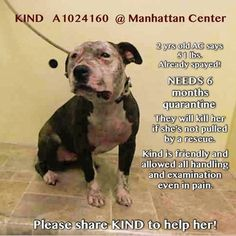 Beaten but not broken, NY pit sweetheart needs 6 month quarantine commitment