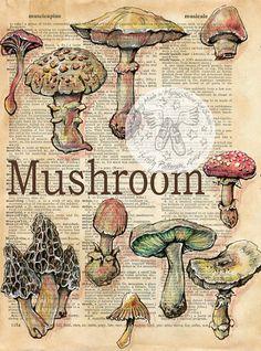 Druck: Pilz-Mischtechnik Zeichnung auf antike Wörterbuch