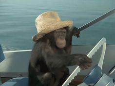 Uno de los guardias dejó la puerta abierta. Este mono aprovechó la oportunidad y se escapó