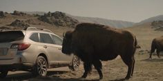 These 3 unique features make the 2015 Subaru Outback rugged like a Bison