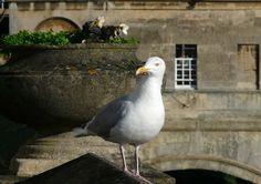 just an gull, met him year ago in Bath, England