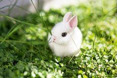 Raças de coelhos e as suas características - PeritoAnimal