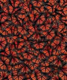 Pile of butterflies