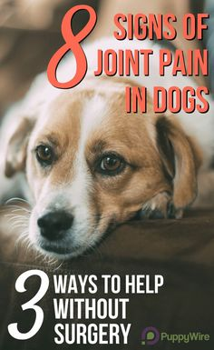 Please watch for these 8 signs of joint pain in dogs. The last thing we want is for your dog to be in pain without you knowing. Once you can recognize the signs there are 3 inexpensive ways to help (without resorting to surgery). 8 Signs of Joint P Dog Health Tips, Pet Health, Health Care, Arthritis, Coconut Oil For Dogs, Dog Insurance, Health Insurance, Dog Care Tips, Dogs