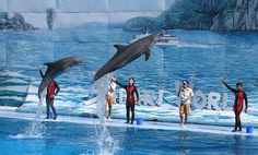 SeaWorld is finally ending public dolphin feeding-here is what they should do next   http://www.onegreenplanet.org/news/seaworld-orlando-ends-feeding-programs/