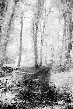Woodland Walk by Chris Atkinson on 500px