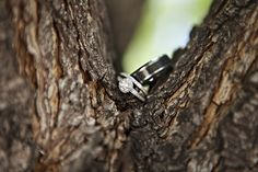 Have an outdoor wedding? How about a nice, natural wedding ring shot | Courtney Bowlden Photography