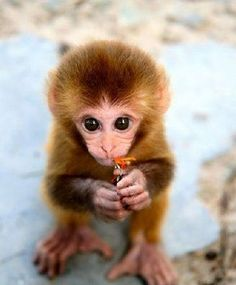 Baby monkey = Jonah. Baby animals = Potential theme!