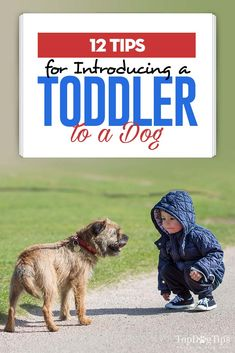 Top 12 Tips for Introducing a Toddler to a Dog New Puppy, Puppy Love, How To Introduce Dogs, Introducing A New Dog, Adoption Stories, Baby Yoga, Pet Gate, Dogs And Kids, Expecting Baby