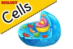 1000+ images about Cells on Pinterest | Animal Cell, Biology and Plant ...