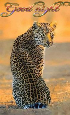 What beautiful creatures, the big cats. Nature Animals, Animals And Pets, Cute Animals, Wildlife Nature, Rock Animals, Nature Nature, Wild Nature, Safari Animals, Wild Animals