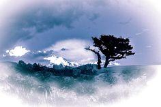 Treescape Clouds, Explore, Photos, Outdoor, Blue, Outdoors, Outdoor Games, The Great Outdoors, Exploring