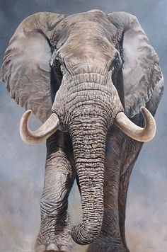 Showcasing the original artwork of Canadian Artist Kindrie Grove: Cast Bronze Sculpture, paintings and drawings of wildlife and horses and fantasy characters. Elephant Canvas Art, Elephant Artwork, Elephant Images, Elephant Pictures, Elephants Photos, Elephant Love, Baby Elephants, Baby Animals, Wild Animals Photography
