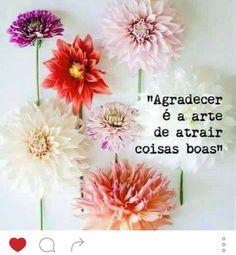 #agradecer #gratidão