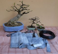 Porta attrezzi - Tools roll #bonsai #ikebana In vendita Ikebana, Bonsai, Planter Pots, Bonsai Trees, Bonsai Plants, Floral Arrangement, String Garden